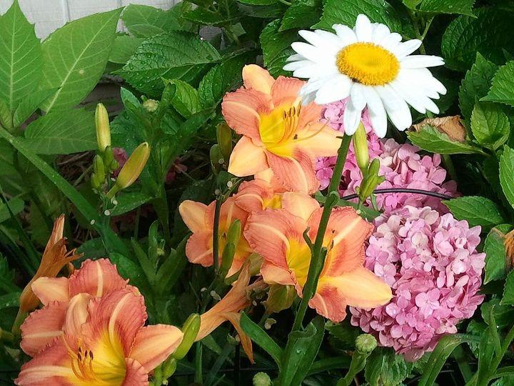 gardening in central mississippi 2013, flowers, gardening, hydrangea, outdoor living, raised garden beds