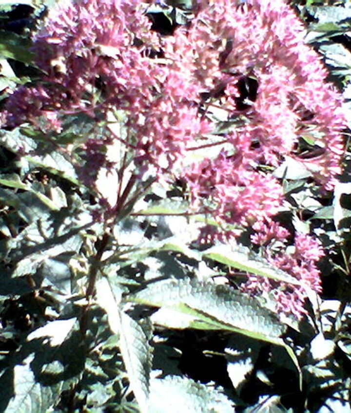 Bumble bees busy - busy