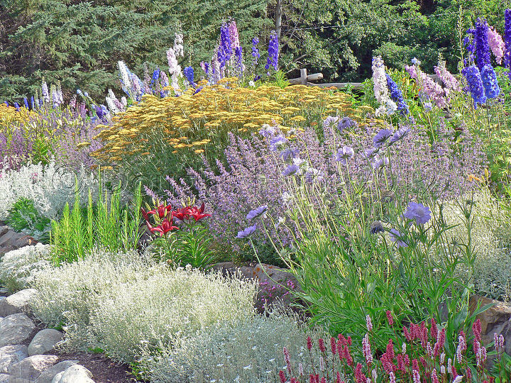 Part of the long border at the side of the garden.