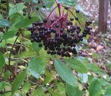 q help me identify this, gardening