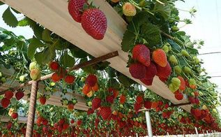 recycled gutters into strawberry planters, gardening, repurposing upcycling