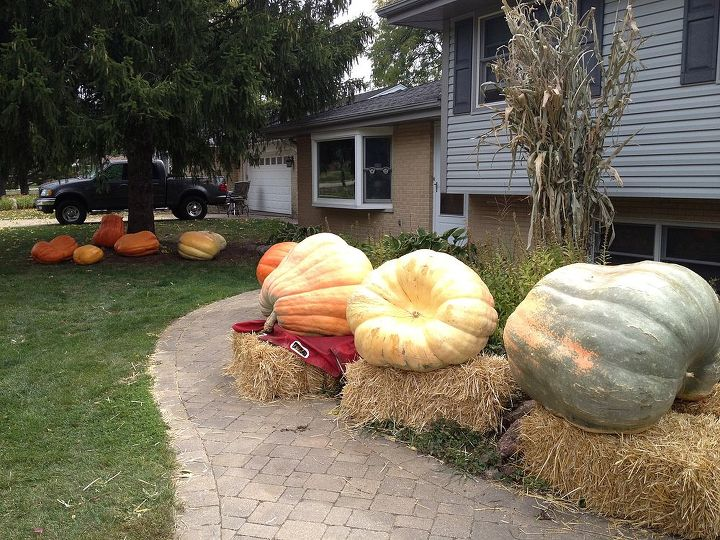 I will be carving some in a couple of weeks. The local school will be coming for their annual field trip 10-26