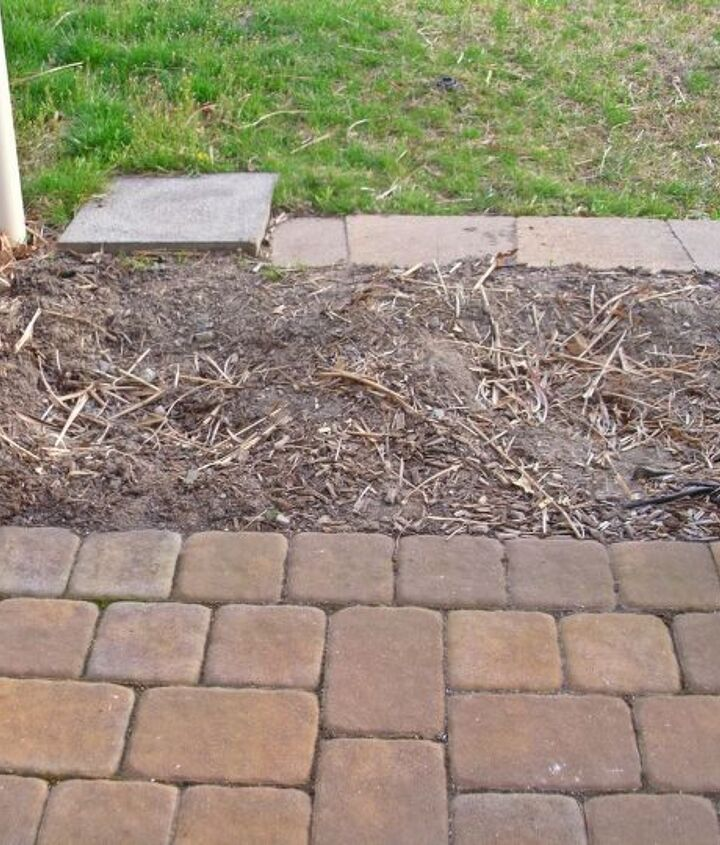 The dimensions are 5 feet length x 3 feet width. Usable planting space is 2 feet wide, due to cement border slanting inward on both sides of bed (which is covered by mulch).