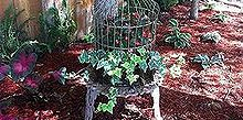 repurposing, gardening, repurposing upcycling, The final product in the garden It loves the dappled sunlight
