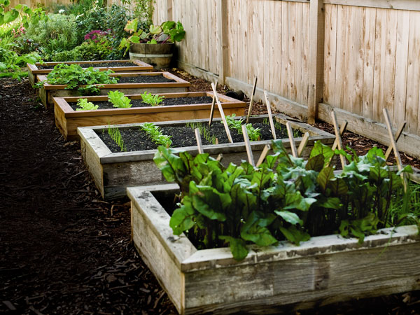 interesting types of gardens, container gardening, flowers, gardening, The raised gardens are a perfect idea if the soil in your garden is not good enough to grow what you want