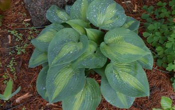 propagate hostas without breaking your back, gardening, landscape