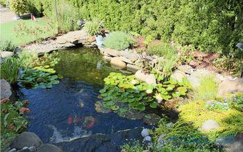 ecosystem pond ideas, go green, ponds water features, Ecosystem Fish Pond Palisades Park NJ
