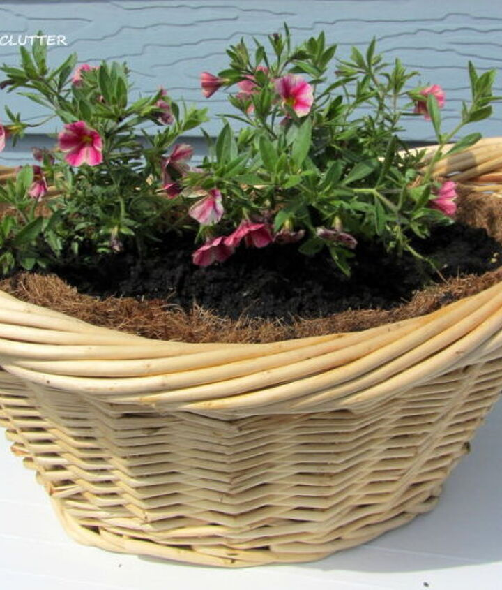 I used a laundry basket shaped container for the Rose Star Calibrachoa.