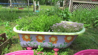 garden junk man style, container gardening, gardening, repurposing upcycling, succulents, my bathtub