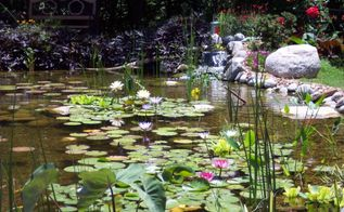 water gardens ponds and water features in oklahoma, landscape, outdoor living, ponds water features, Large Backyard Pond