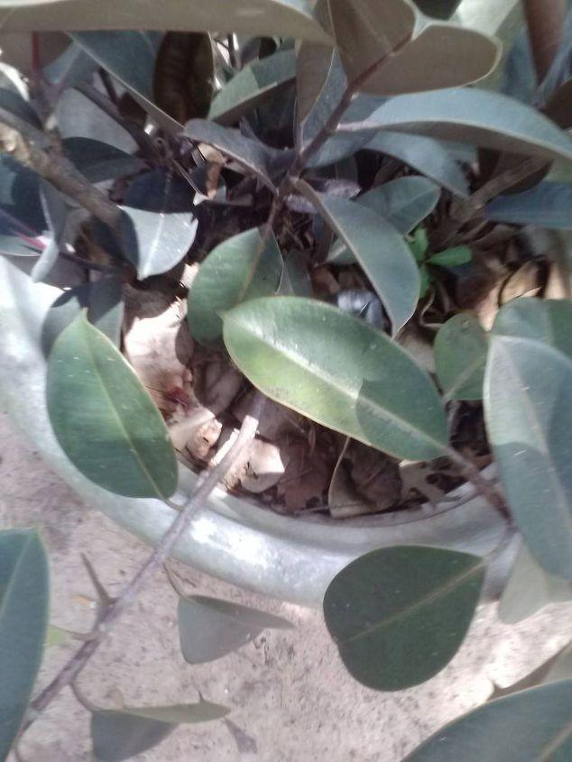 propagating plants, gardening
