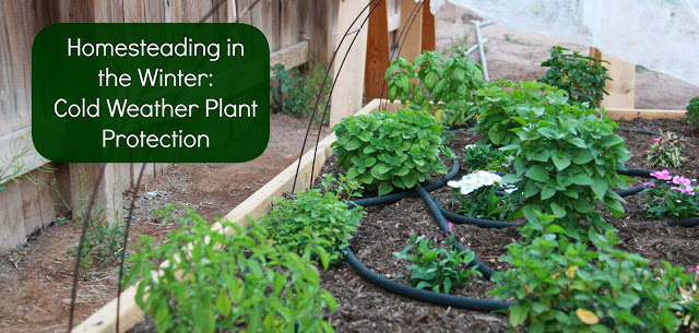 winter homesteading protecting plants in the cold, gardening, homesteading
