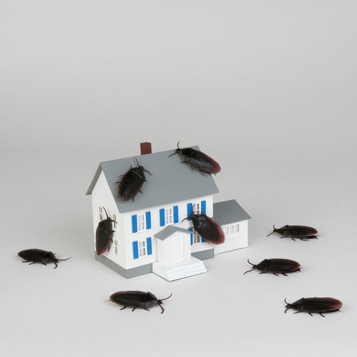 common pest control mistakes, pest control