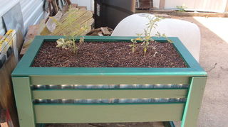 q how to make a container salsa garden, container gardening, diy, gardening, how to