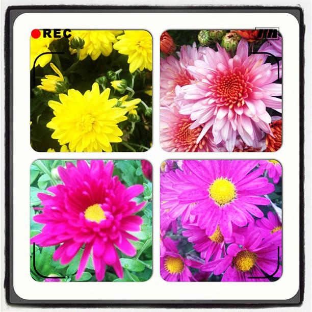 4 different varieties and colors in my garden.