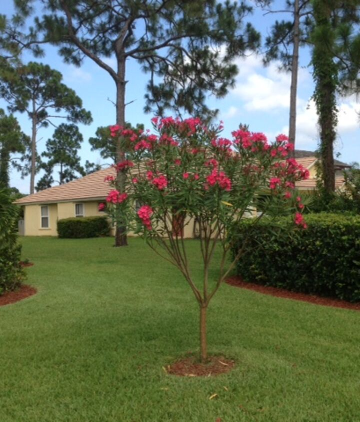 my labor of love, gardening, landscape