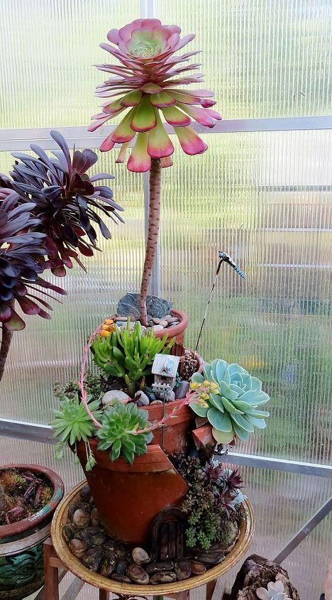 Broken pot succulent garden.