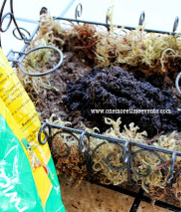 Moss, soil and coffee grounds