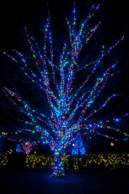 Amazing how the Blue LED Christmas lights pop on this tree.