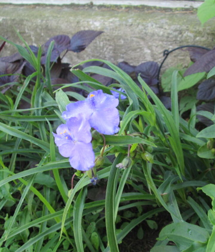 My mystery flower.