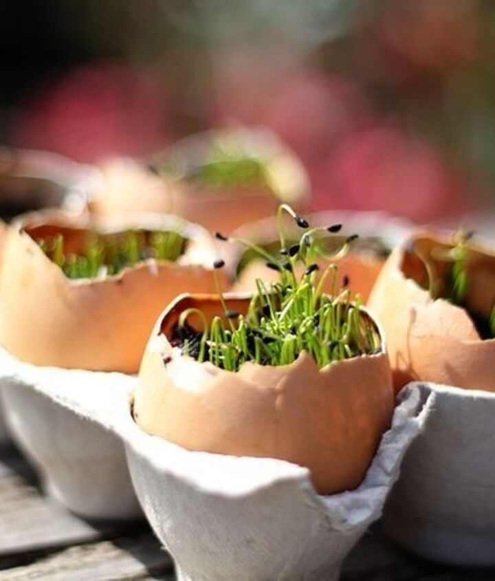 Eggshells. Empty eggshells make great homes for seedlings or succulents because the calcium in the shells gives your plant an extra boost of nutrients.