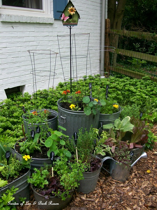 My version of raised beds ~ galvanized trash can garden (holes drilled in the bottoms)