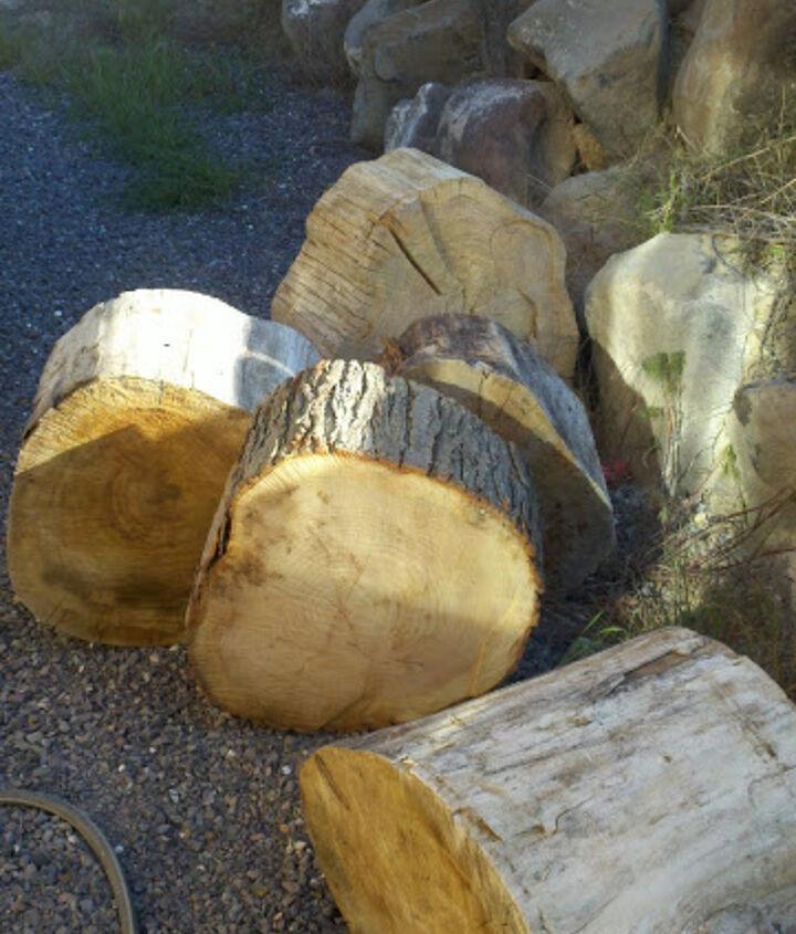 Tree stumps before