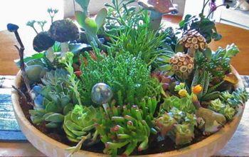 succulent bowl, flowers, gardening, succulents