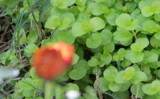 weeds, gardening
