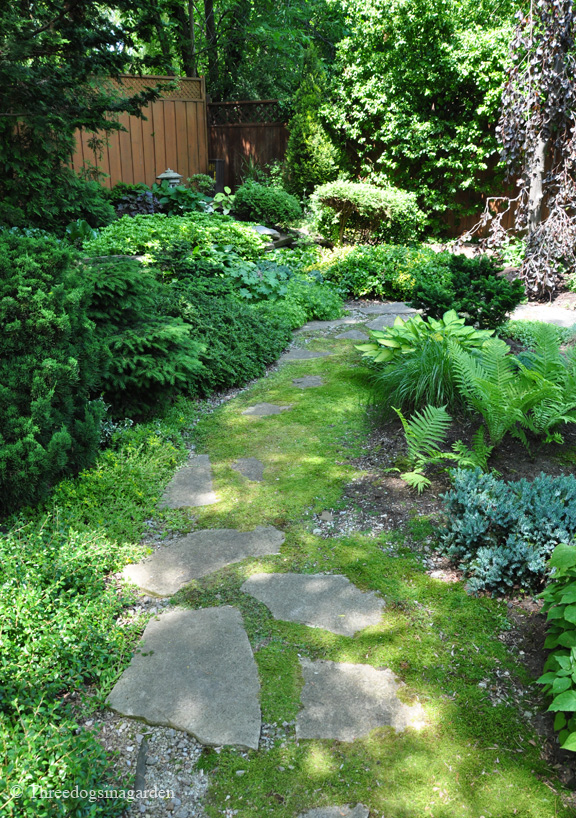 A moss covered pathway leads further into the garden.
