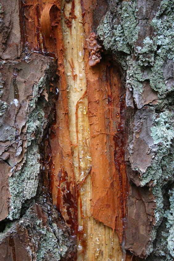 closeup of lightning damage