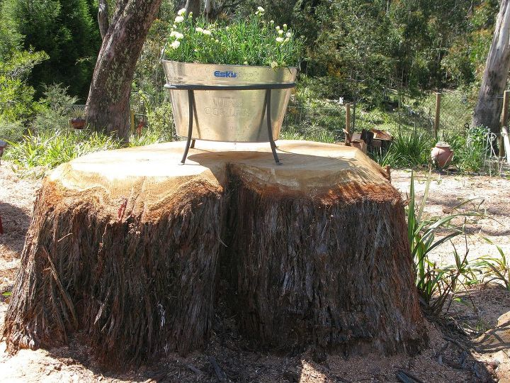 how to dress up a tree stump update, gardening, succulents