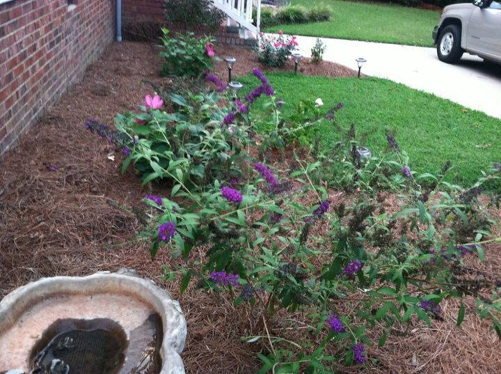 I added a bird bath of course and anxiously awaited the butterflies and hummingbirds!