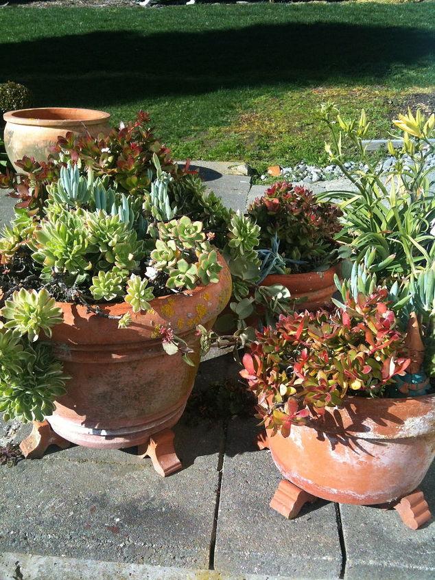 succulents, flowers, gardening, succulents