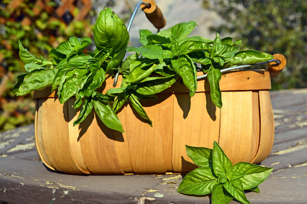 Don't leave those herbs sitting out for too long to preserve all that wonderful flavor at its peak,