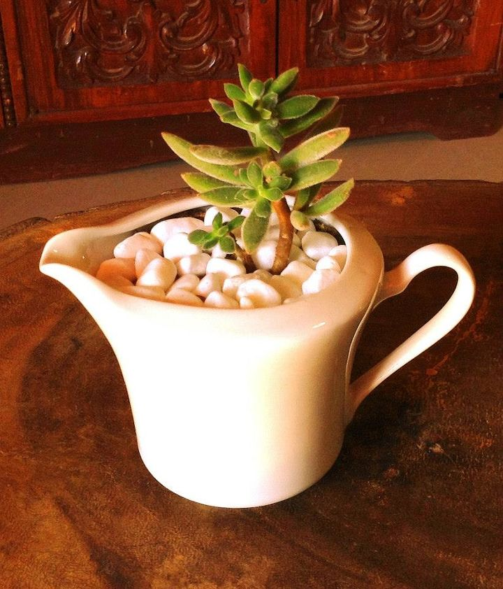 diy succulents in dainty re used white cups, flowers, gardening, succulents