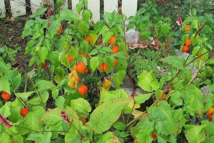 fall is on it s way, gardening, outdoor living, pets animals