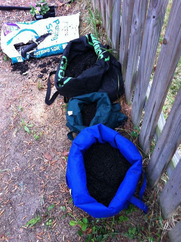 use reusable grocery bags to grow potatoes, gardening