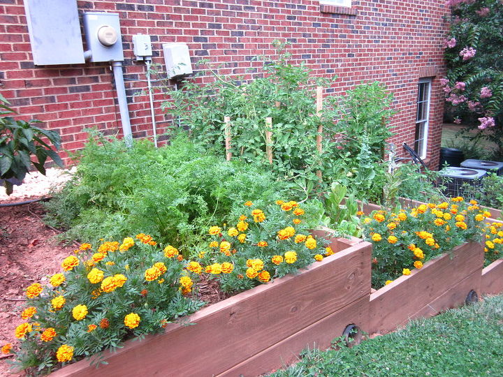Raised Bed Gardening Garden Beds The South Is On A