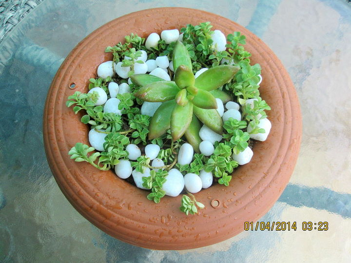 succulent containers, container gardening, flowers, gardening, succulents