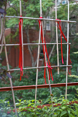 It has been said that red ribbons attract humming birds to a garden but I did not find that to be the case when I hung the stands of red from my trellis-urban-hedge! INFO  @ http://www.thelastleafgardener.com/search/label/Hummingbirds