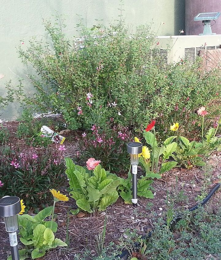 butterfly garden in progress