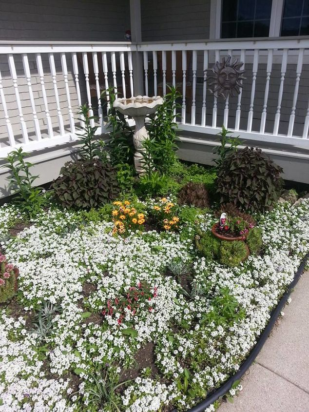 Corner area of my front porch. Alyssum is going strong! Time to start managing it.. lol