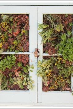 upcycled vertical succulent garden, crafts, flowers, gardening, succulents, Vertical Succulent Garden made from an older window frame I added succulents to the window