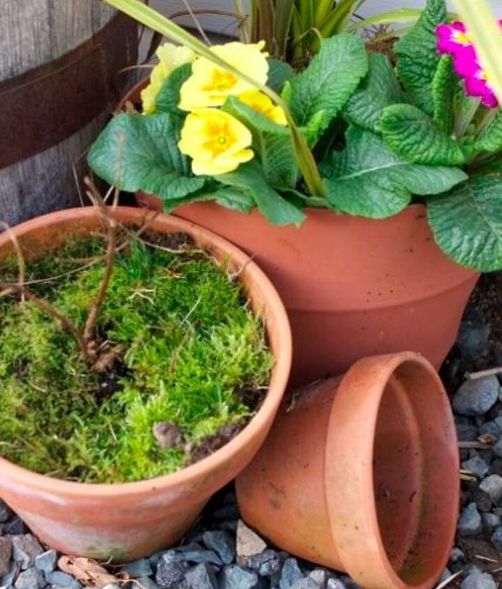 Fill terracotta pot's with a little soil and top with moss
