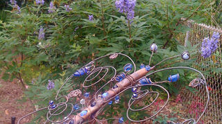 q now what do i do with this, gardening, This is the vitex I just planted and already in bloom