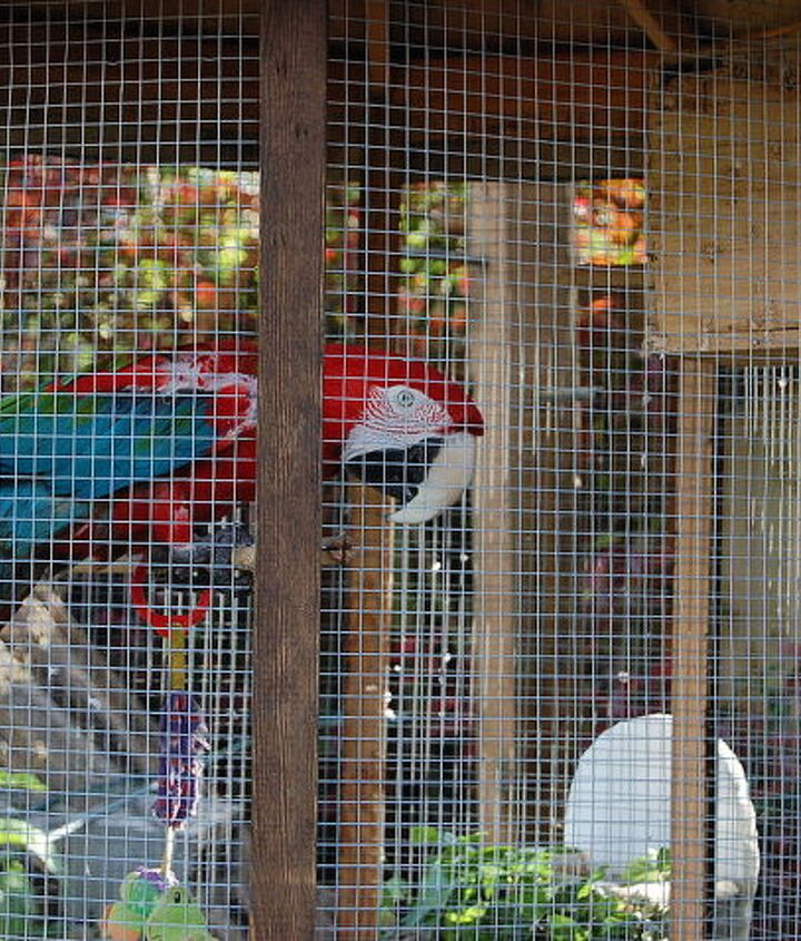 Macaw in cage