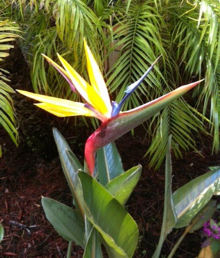 beautiful bird, gardening