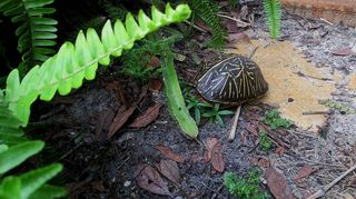 wildlife turtle, wildlife animals, Just another thing I love Nature is beautiful