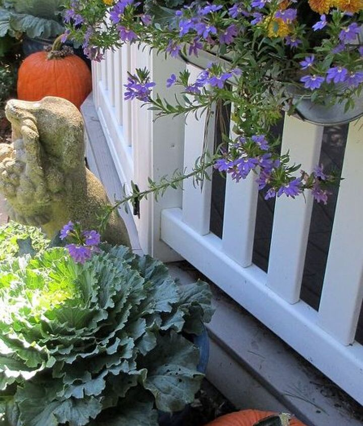 For the First Day of Fall - switched out the IKEA window boxes hanging on the gazebo with tiny mums, flowering kale and kept the scaevola. Quick and easy change! season!http://pinterest.com/barbrosen/our-fairfield-garden/